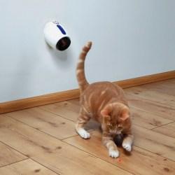 Moving Light Laserpointer Beschäftigungspielzeug für Katzen