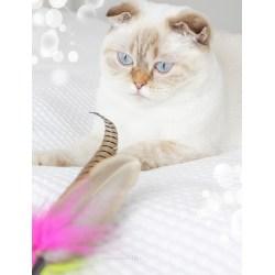 XXL-Federanhänger mit eine Feder vom Fasanenschwanz | Purrs Cat Toys