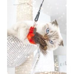 Purrs Robin Bird Refill Attachtment | Katzenspielzeug aus Schafwolle