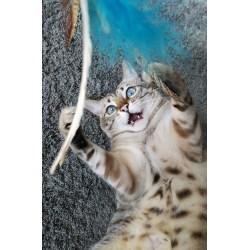 Katzenangel Flying PurrSuit | Leichte Spielangel für Katzen von Purrs