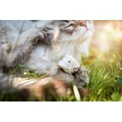 Skitter Mouse - kleines und leichtes Katzenspielzeug | Purrs Cat Toys