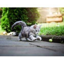 Spielball aus Filz - Naturprodukte als artgerechtes Katzenspielzeug