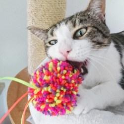 Purrs Aromatherapy Shaggy Ball mit Baldrian | zottiges Katzenspielzeug