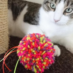 Purrs Shaggy Ball zottiger Spielball für Katzen | NEW Cat Toy!