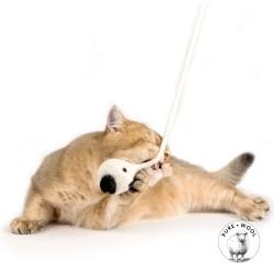 WoolenDucky von Profeline – gefilztes Naturspielzeug für Katzen
