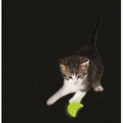 Glow Moon Spielzeug für die Nacht von Petstages | Katzenspielzeug