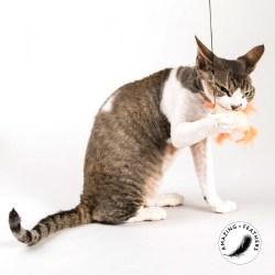 Profeline Cheeky Anhänger | Katzenspielzeug aus natürlichen Material