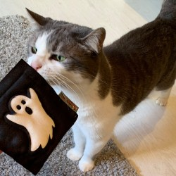 4cats Halloween Motiven mit Katzenminze