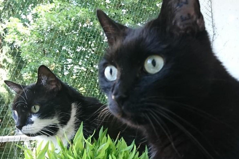 Unsere Produkttester und welches Katzenspielzeug sie empfehlen