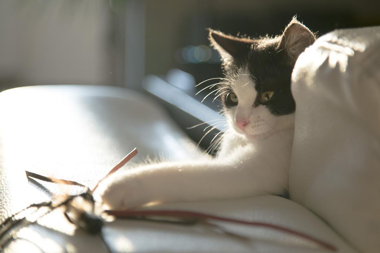 Häufige Fragen über Katzenspielzeug