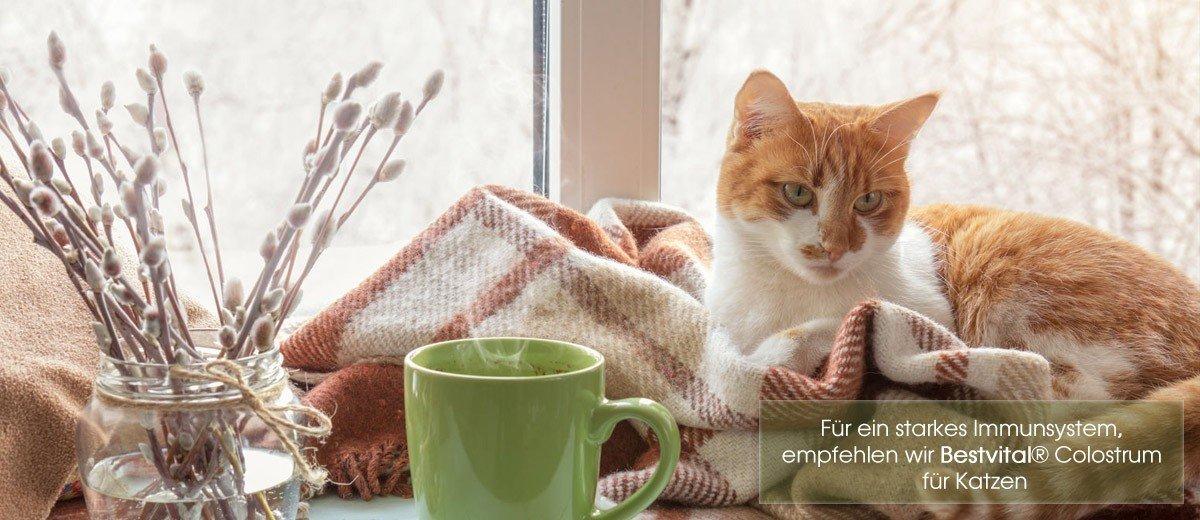 Für ein starkes Immunsystem, empfehlen wir Bestvital® Colostrum für Katzen